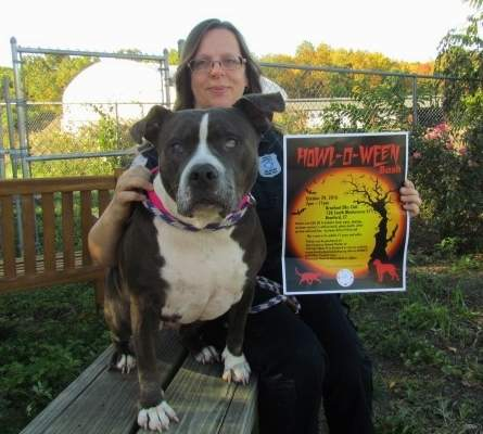 Part-time Animal Control Officer Eve Vandewarker has a special place in her heart for helping special needs animals at Dan Cosgrove Animal Shelter, like Tessa, a blind pit bull who arrived last month. Vandewarker is co-organizing a Howl-O-Ween Bash on Saturday, Oct. 29 at Branford Elks Club to help raise funds to assist with medical care and other rehabilitation expenses for animals at no-kill Cosgrove municiple shelter. Photo by Pam Johnson/The Sound