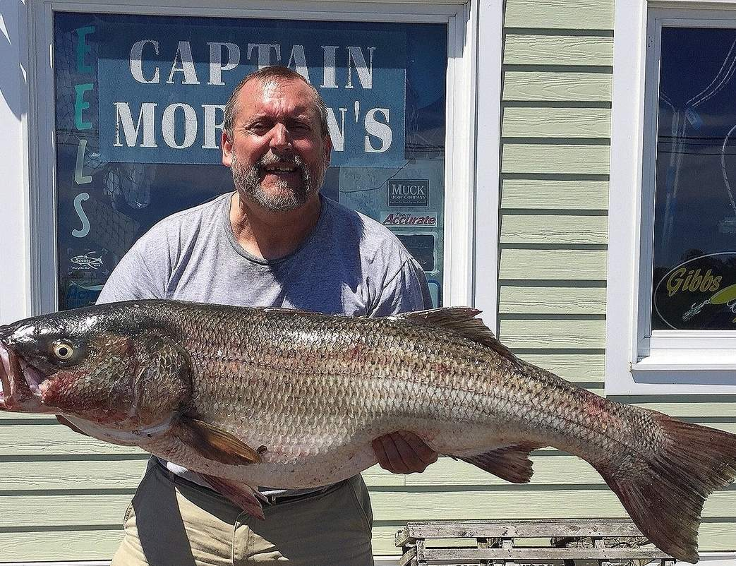 Paul Kilbourne of Madison rowed out to catch this nice career-best 35-pound, 45-inch striper once it sensed the vibration of his live eel. Photo courtesy of Captain Morgan