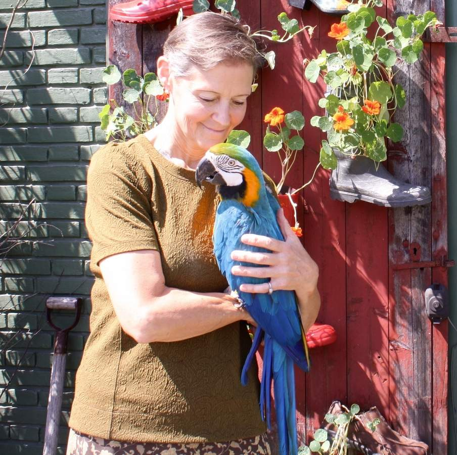 Allison Sloane (shown here with rescued macaw Morgan) is on a mission to create a 100,000-square-foot rehabilitation center for birds and reptiles in southern Connecticut. Photo by Rita Christopher/The Courier