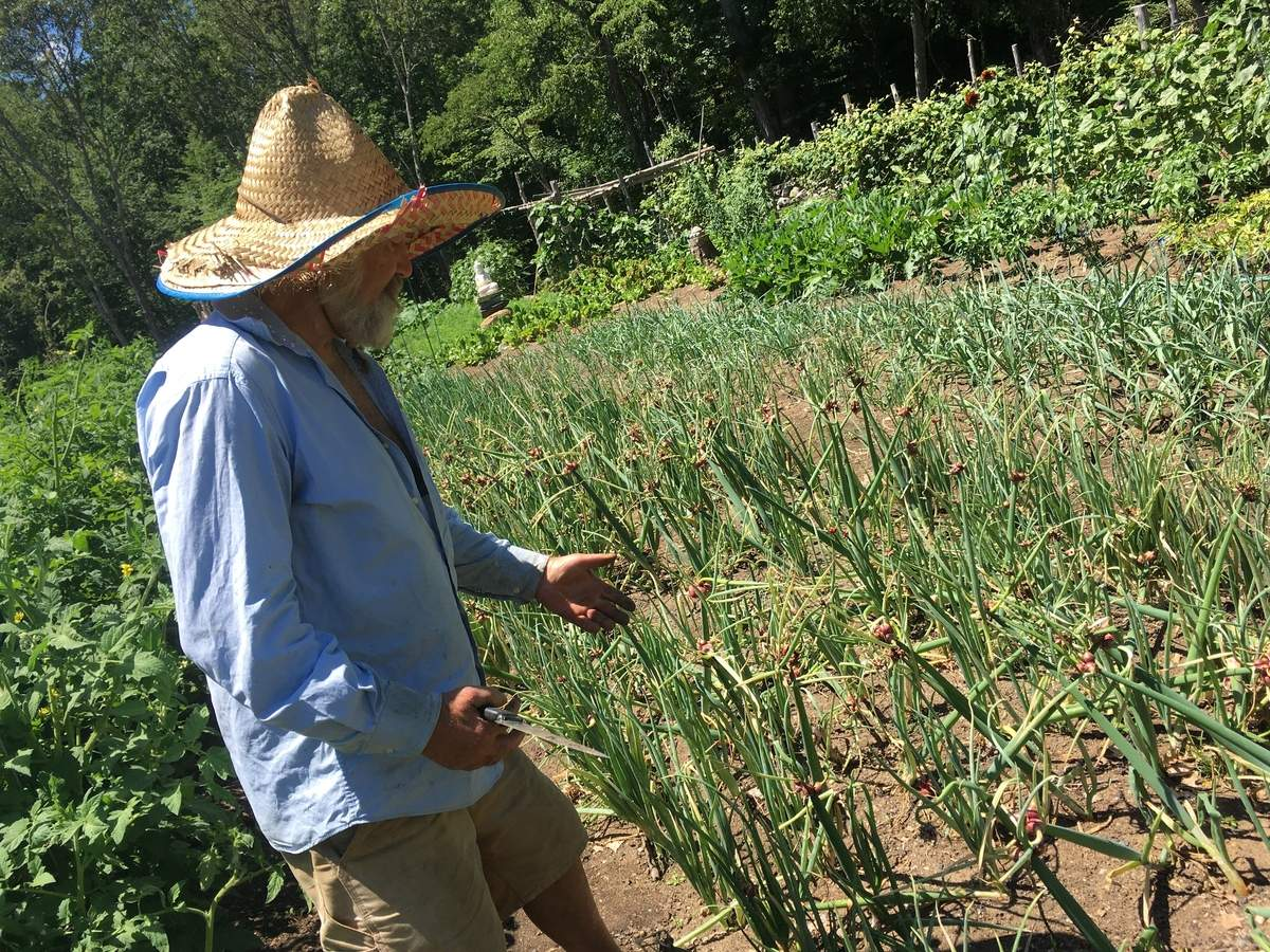 Squash and his Eqyptian walking onions. Photo by Pem McNerney/The Source