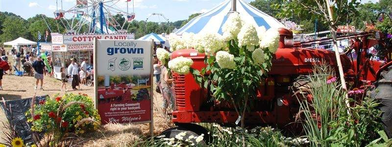 Photo courtesy of the North Branford Potato and Corn Festival