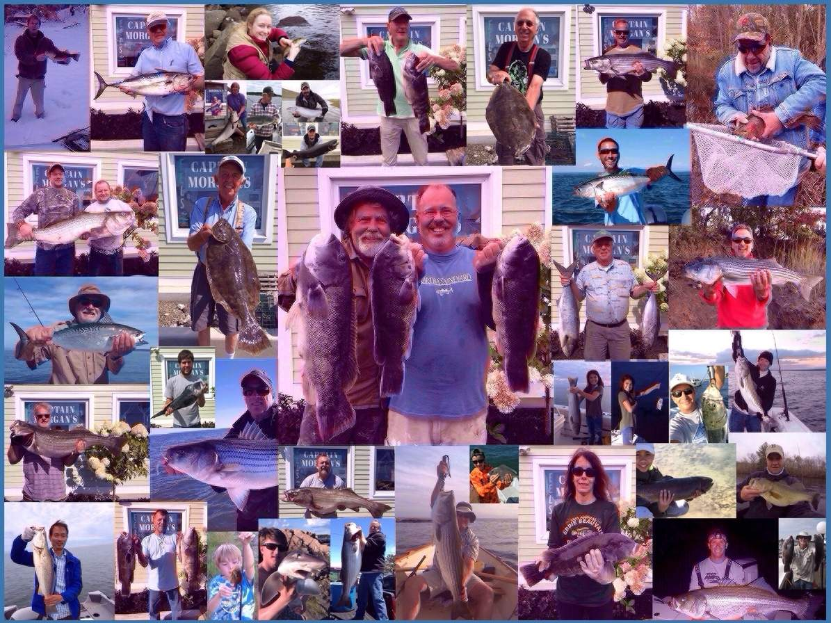 A partial glimpse of what fishing in Long Island Sound, its tidal rivers, and tributaries was like during 2017. Photo illustration courtesy of Captain Morgan