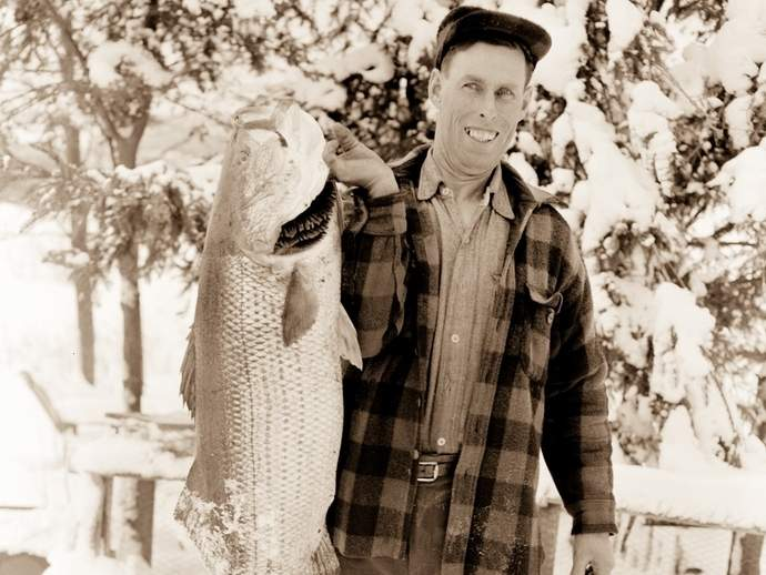 Holdover striped bass have a history of being caught throughout the winter, as illustrated by this 36-pound, 41-inch prize caught by Sidney Johnson back in January of 1958. Photo courtesy of Spike Webb