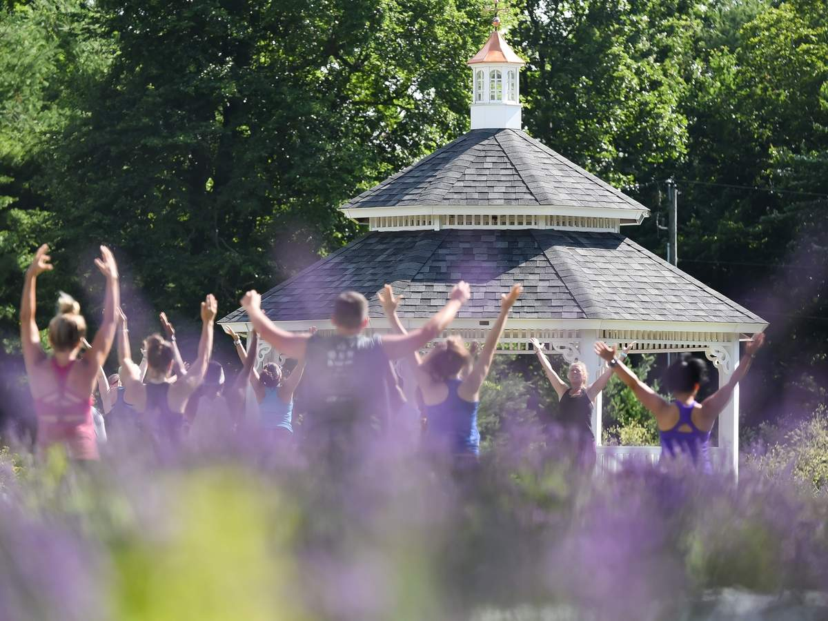 Summer Yoga at Lavender Pond Farm was moved to Sunday morning at 9am  due to the rainy forecast for Saturday. The yoga class had around 65 people attending spread out through the lavender gardens, and was lead by Amy Hewitt. The next yoga class is scheduled for July 25, August 8th and August 22nd.  Photo by Kelley Fryer/The Source