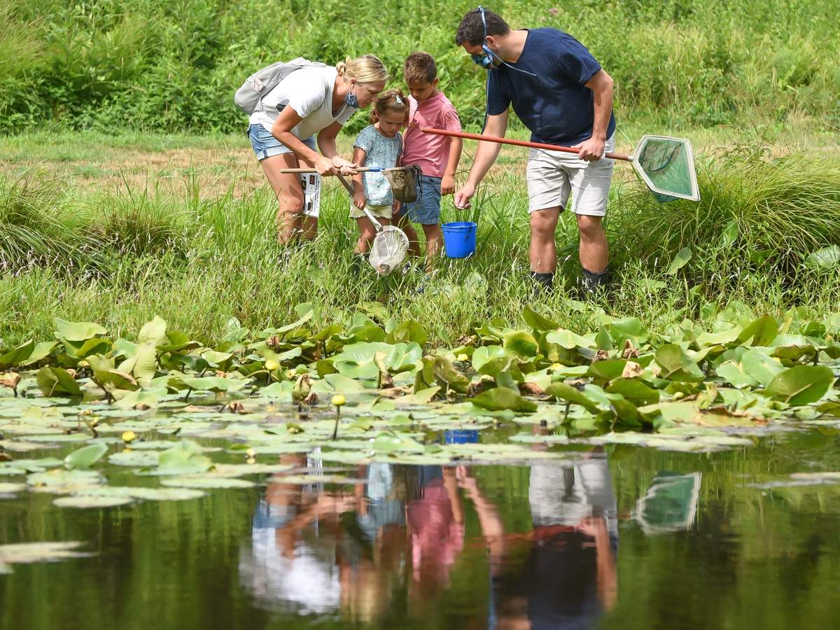 Families came out to Bauer Park to discover what critters live in the ponds, using nets and buckets Sunday morning at the Pond Dipping for Families class lead by Donna Dione, a Bauer Park instructor. Lindsie and Seth Winetrout look at the muddy net with Averie and Eli. Photo by Kelley Fryer/The Source