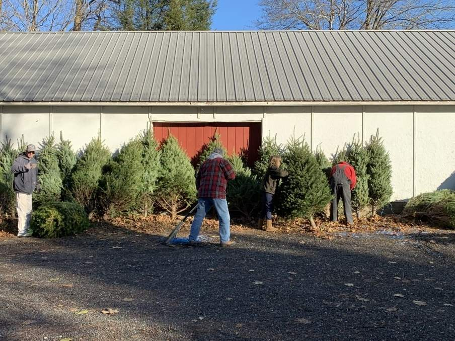 Deep River-Chester Lions Club Tree Sale volunteers Rob Lunn, Dave Thorpe, Kim Lee, and Tim Carlson set up for the 2019 sale. This year, the sale kicks off at Deep River Hardware on Friday, Nov. 27.  Photo courtesy of Kim Lee