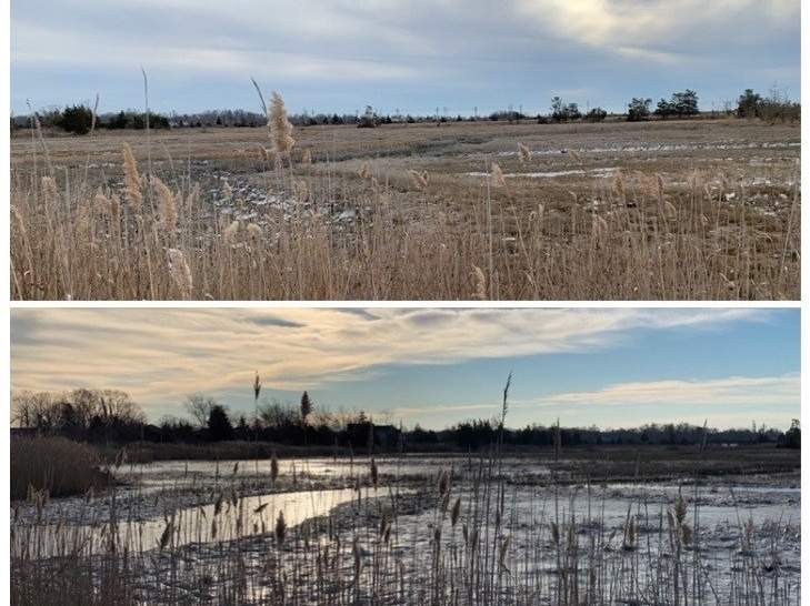 Indicative of this year's dramatic weather swings are these Madison and Guilford tidal wetlands—a 26-degree icy morning high tide (bottom), followed by a clear 41-degree afternoon low tide (top). Photo illustration courtesy of Captain Morgan