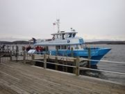 EagleWatch and Winter Wildlife Boat Cruises; Friday, March, 1, 2013