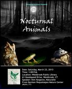 Nocturnal Animals; Saturday, February, 23, 2013